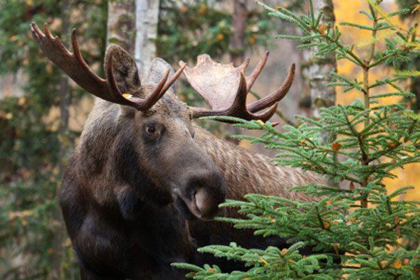 moose loop.jpg